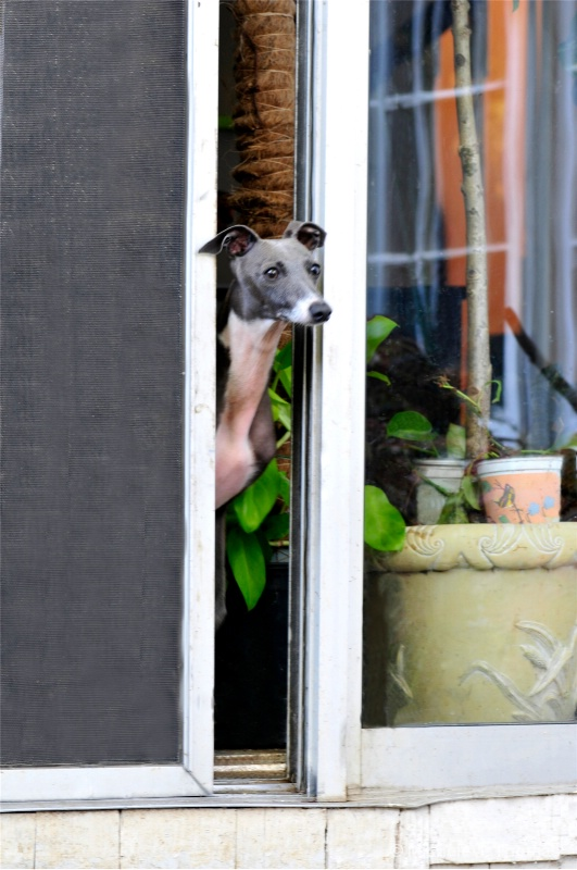 I Managed To Open The Door, Shall I Go Out?
