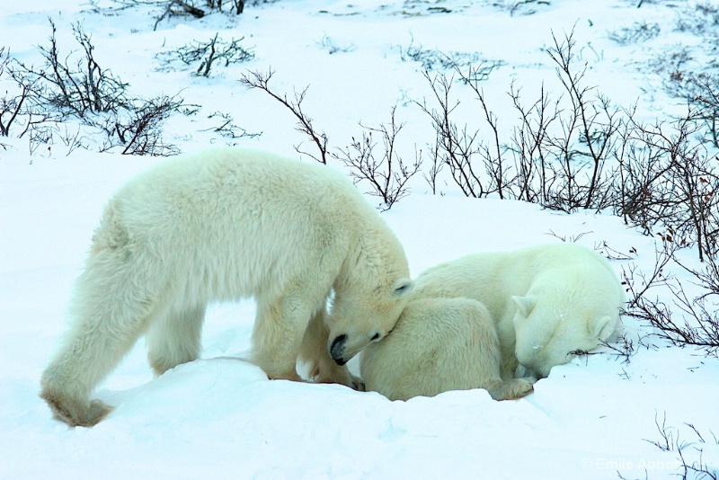 Cub's love for its mother