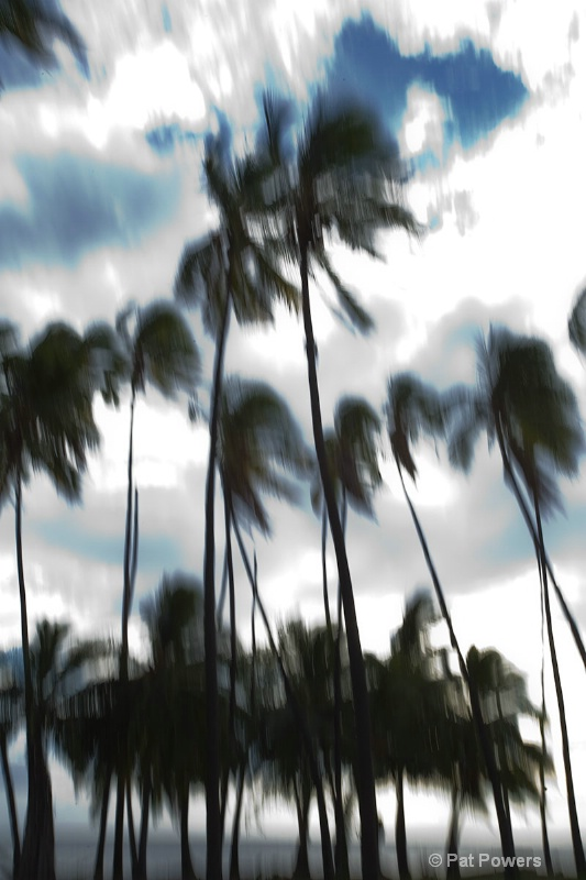Palm Trees on a Cloudy Night
