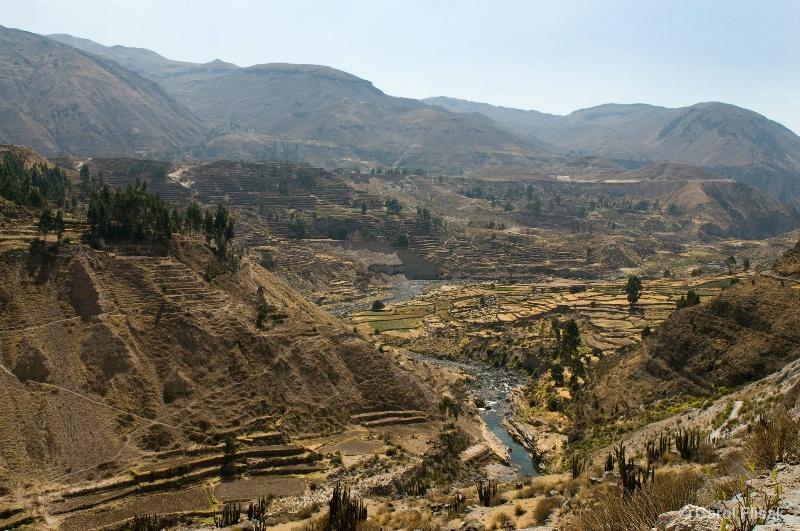 Pre-Inca Terraces in Colca Canyon, Peru