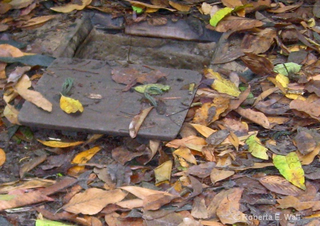 Cu Chi tunnels under leaves