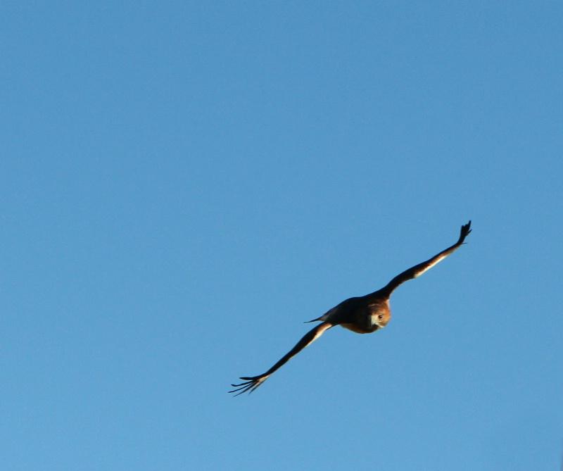 The glide