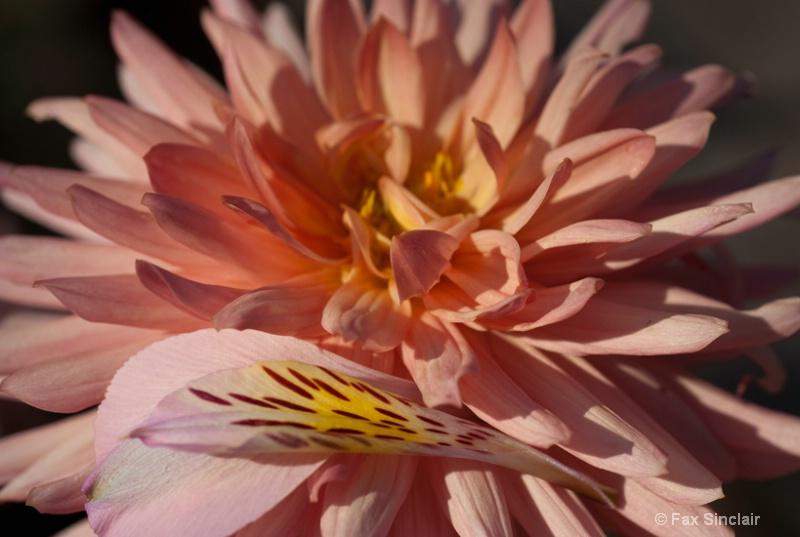 Stray Petals 2