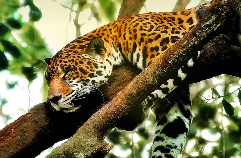 Sleeping in the Wild