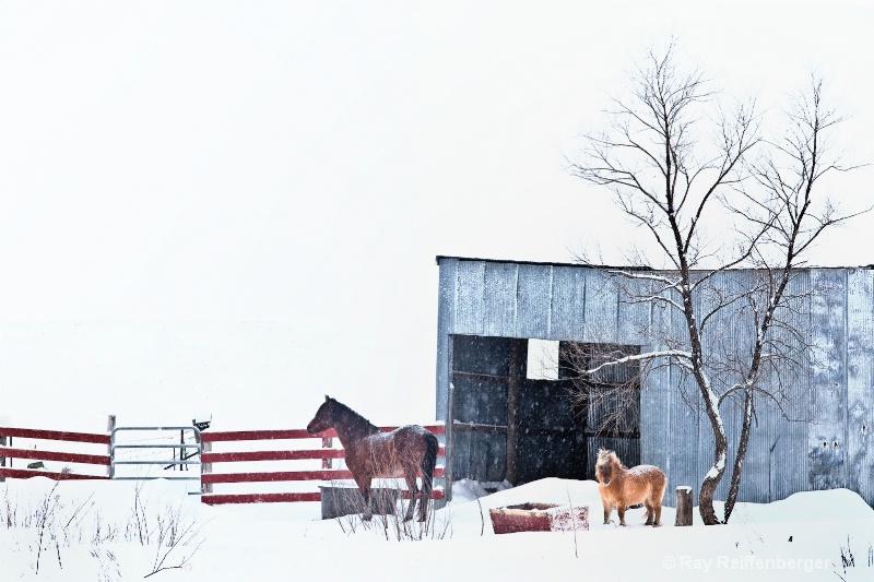 img 0213 Winter 2009