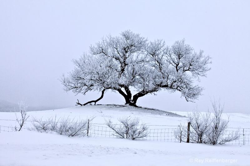 img 0327 Winter 2009