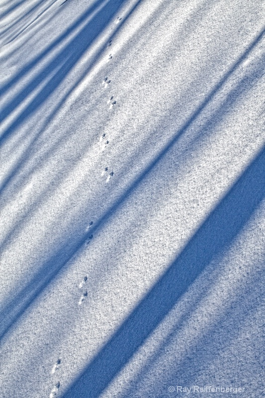 img 9961 Winter 2009