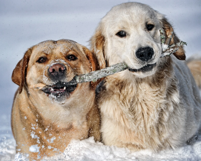 Ginger and Marley Playing in Snow