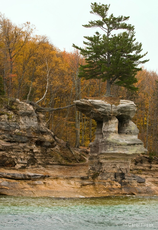 Roots Reaching ~ Pictured Rocks