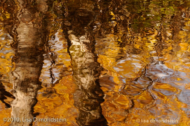 Standing in the water @Lisa Dimondstein
