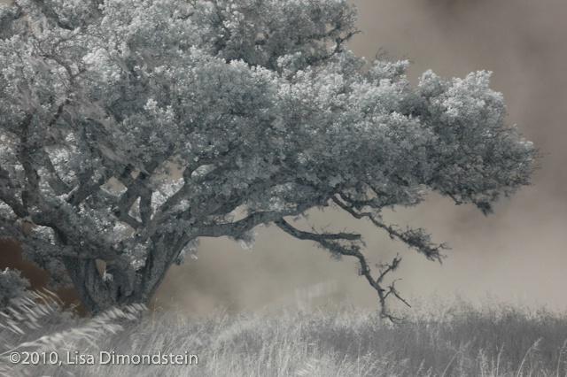 Wild Wind @ Lisa Dimondstein