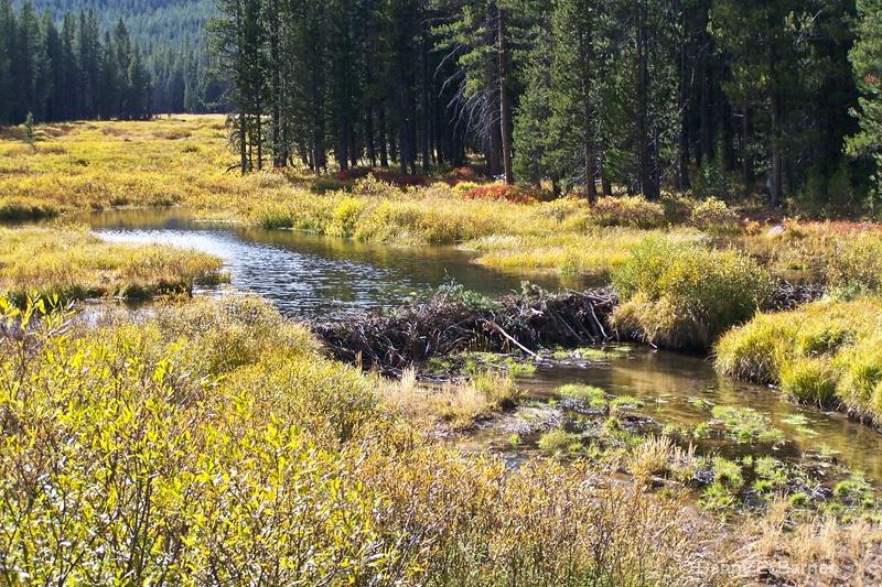 Beaver Dam, WY