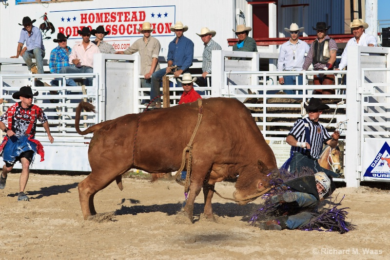 I Think the Bull Won