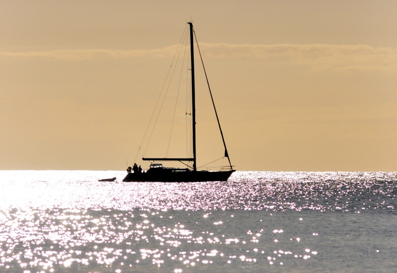 Sunset sihouettes sailboat on sparkling sea,