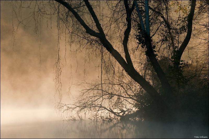 Mist and Tendrils