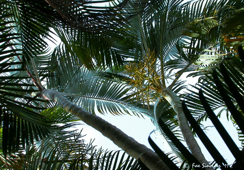 Palm's Patterns