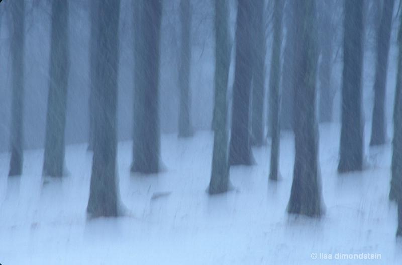 maple grove in winter