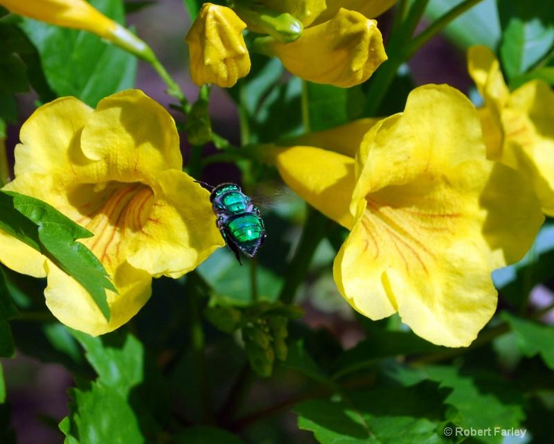bugging flowers