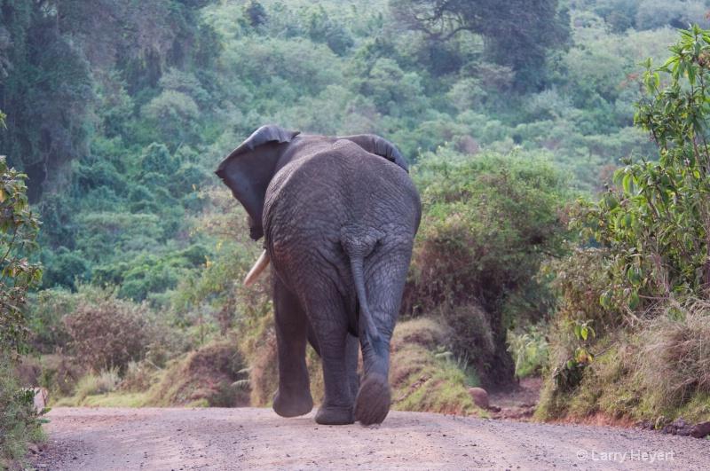 Traffic jam- Ngorongoro Crater-Tanzania