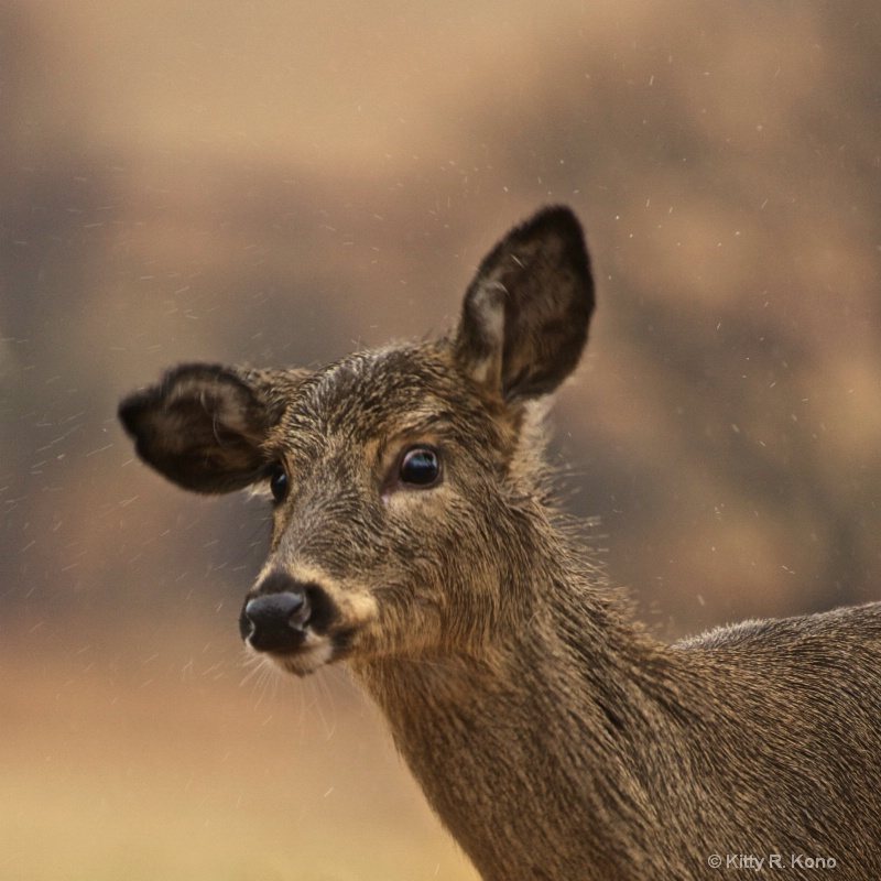 Wet Surprised Deer