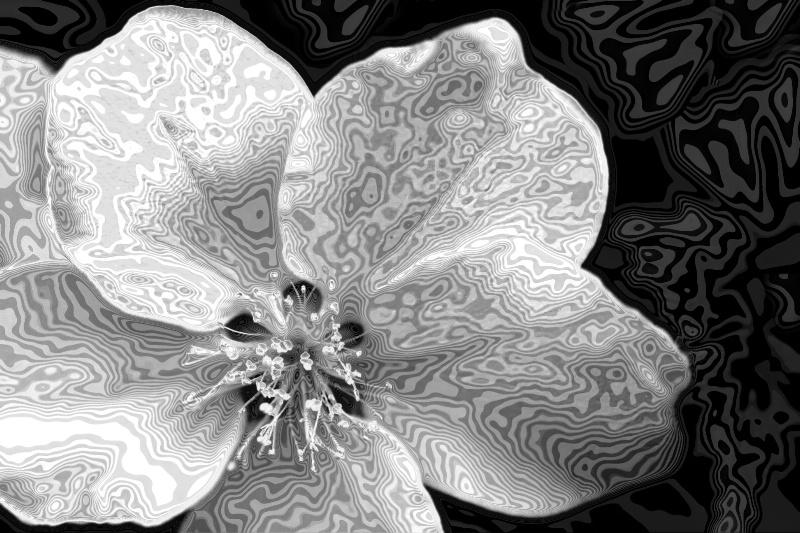 Flower Of Fancy