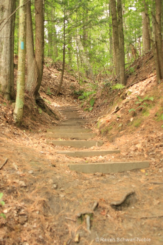 Stairs to Where.NiquetteBaySP, Colchester, Vermont