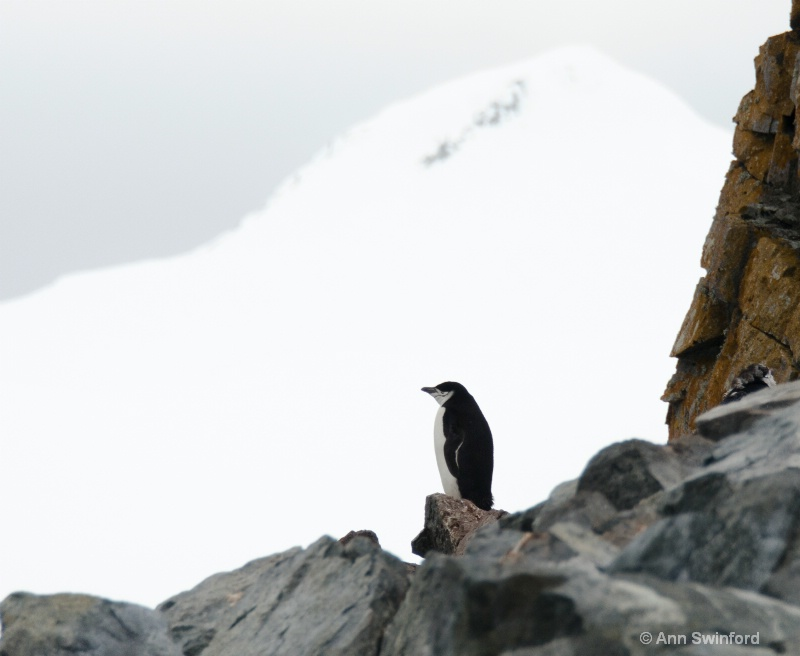 Penguin Lookout