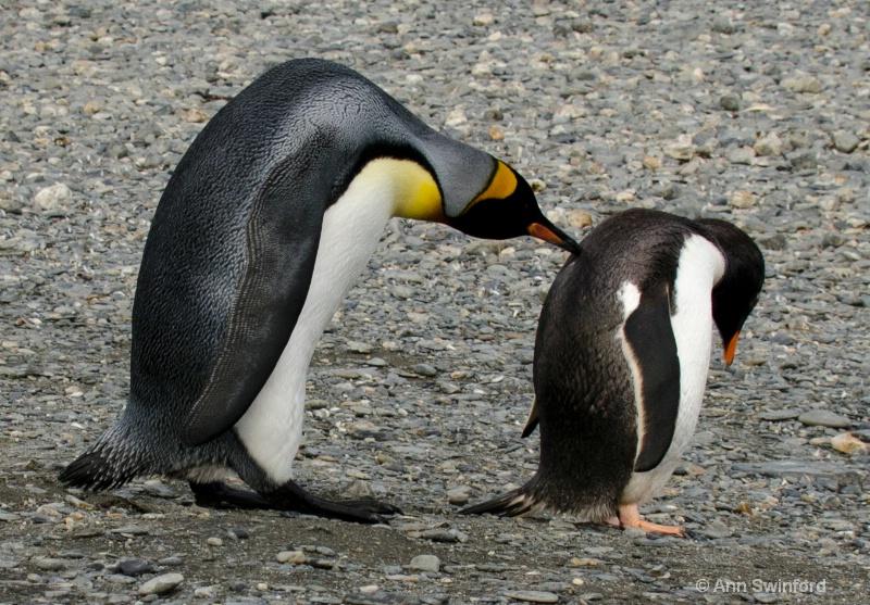 Mean Penguin