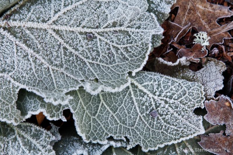 Coated by Freezing Fog, Ashland, CO
