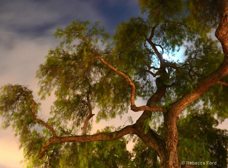 Full Moon in Old Tree
