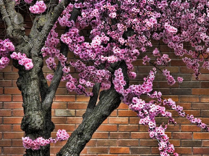 Brick Floral