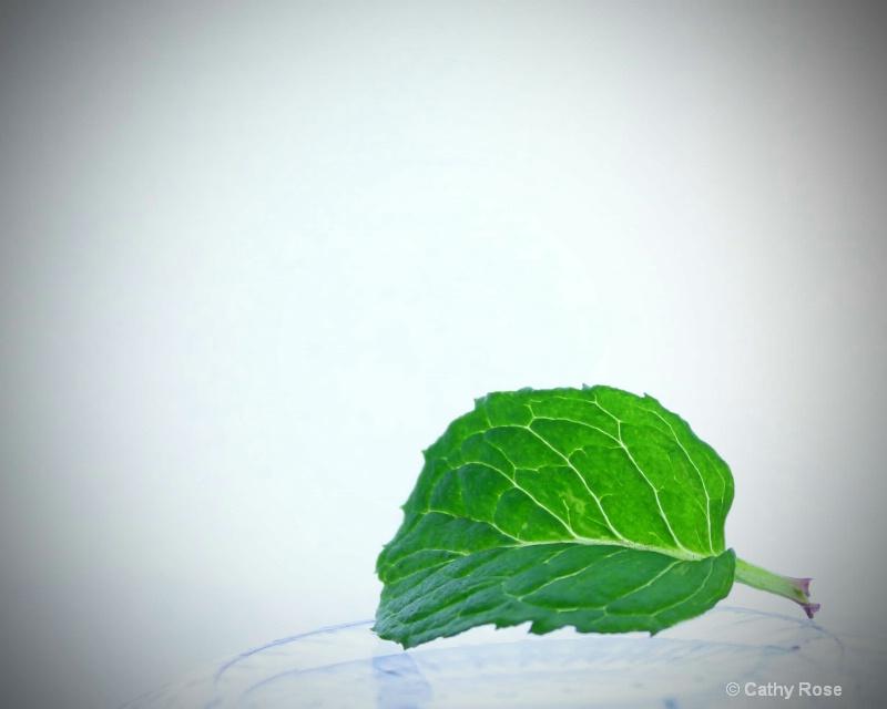 -Mint Green-