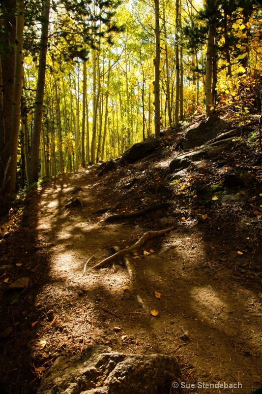 Trail Lit by Aspens, Mt. Yale, CO