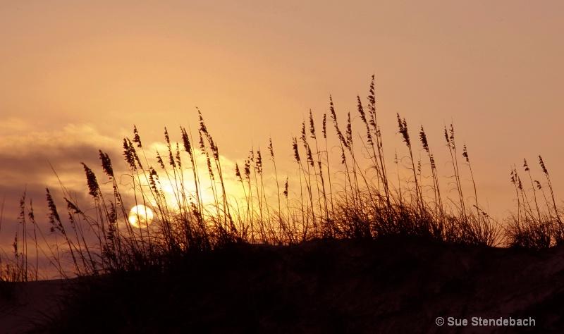 Sea Oats Honoring the Sun, Corolla, NC