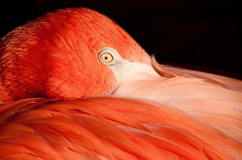 Flamingo Up-Close