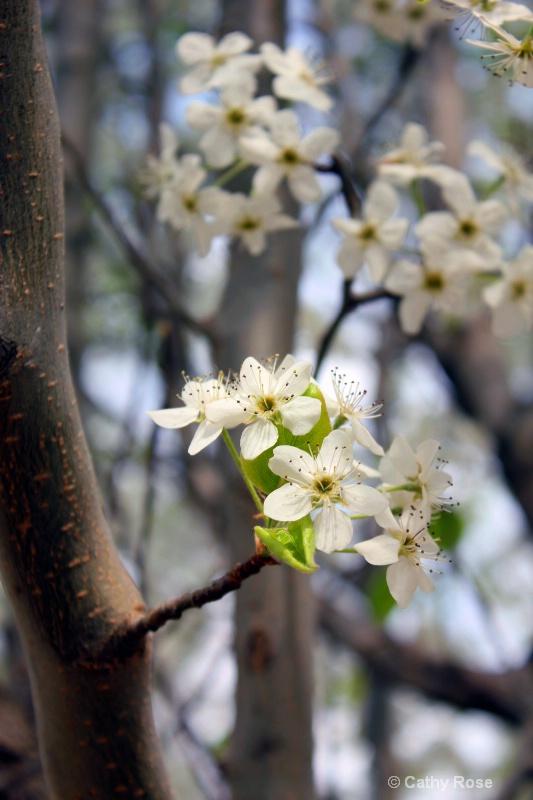 -Blooms-
