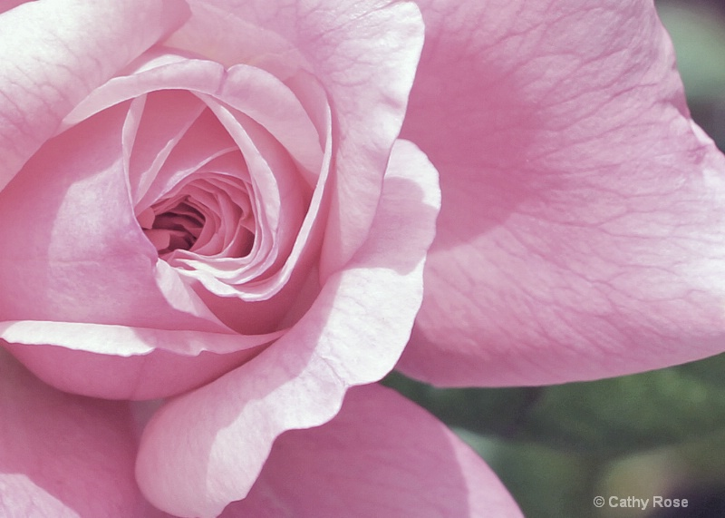 -Roses are Pink-