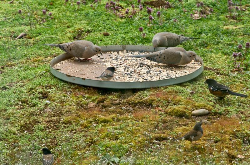 Doves Turn