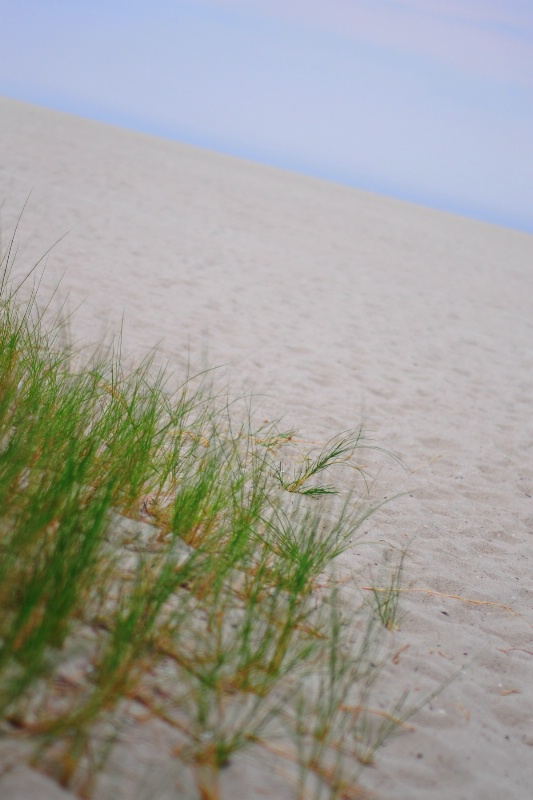 sea grass and sand