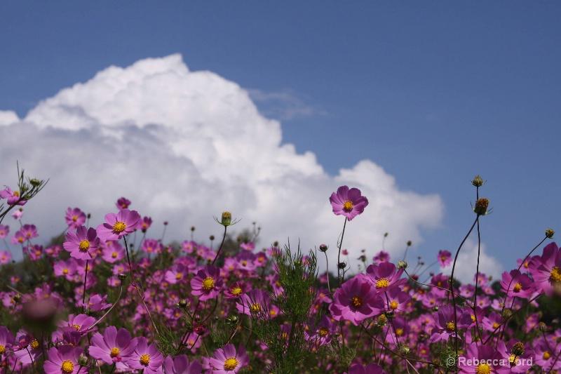 Michoacan Wildflowers