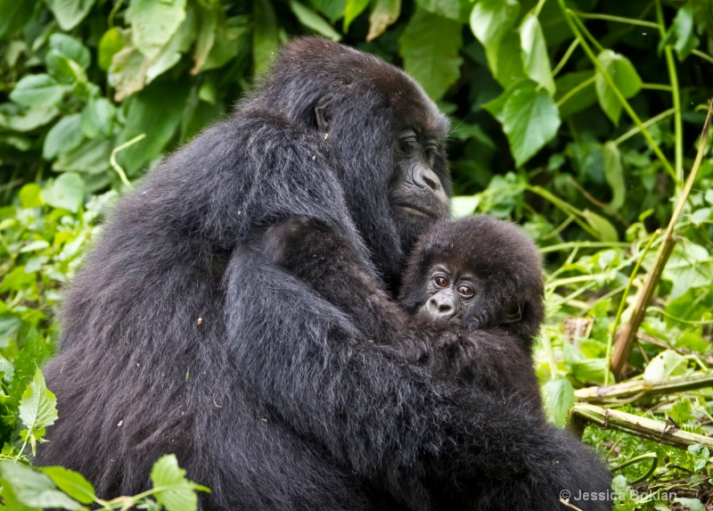Mother with infant  [Kwitonda family]