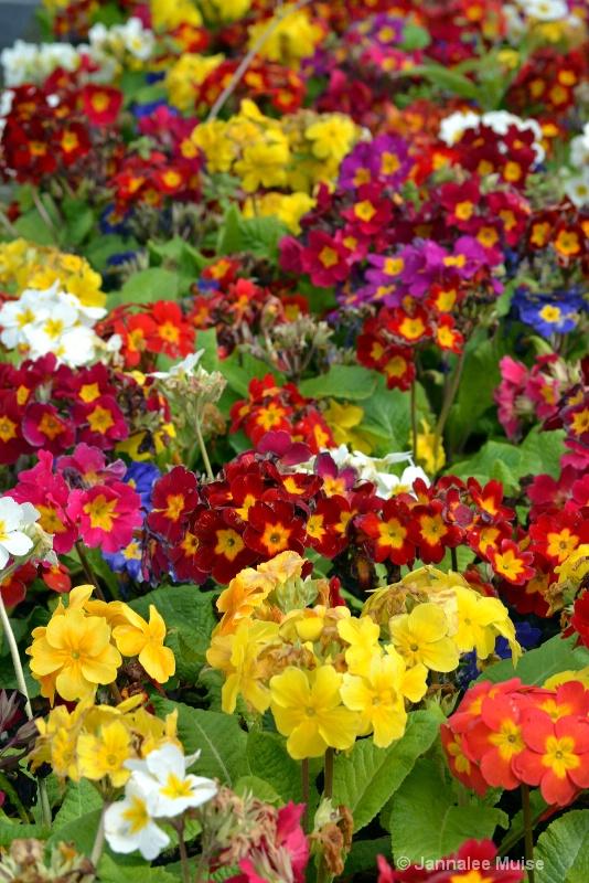 Ireland spring colors
