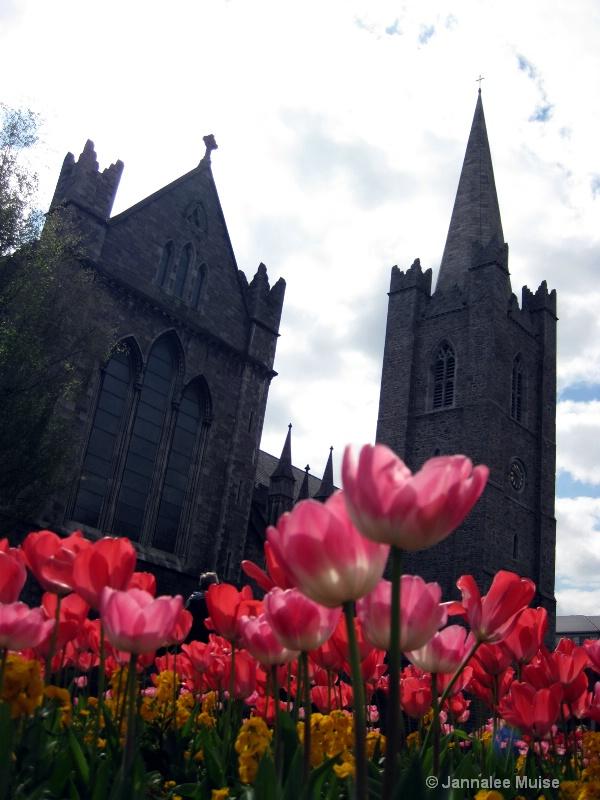 St Patrick tulips