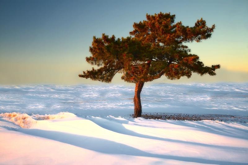 Snowlight 5