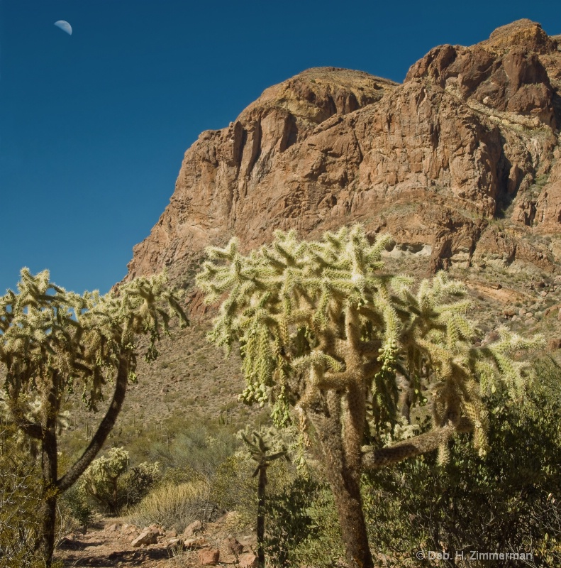 Moon over the Cholla at   Organ Pipe National Mon.