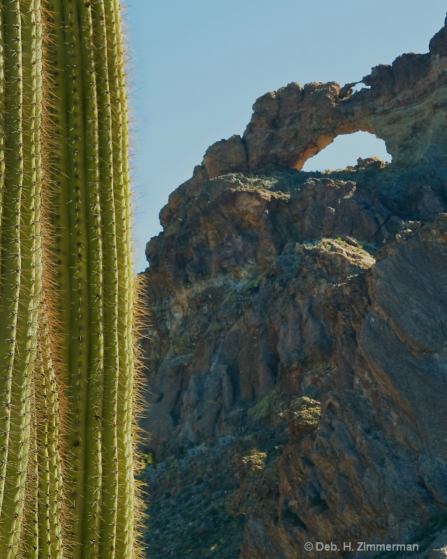 Saguaro and the Arches
