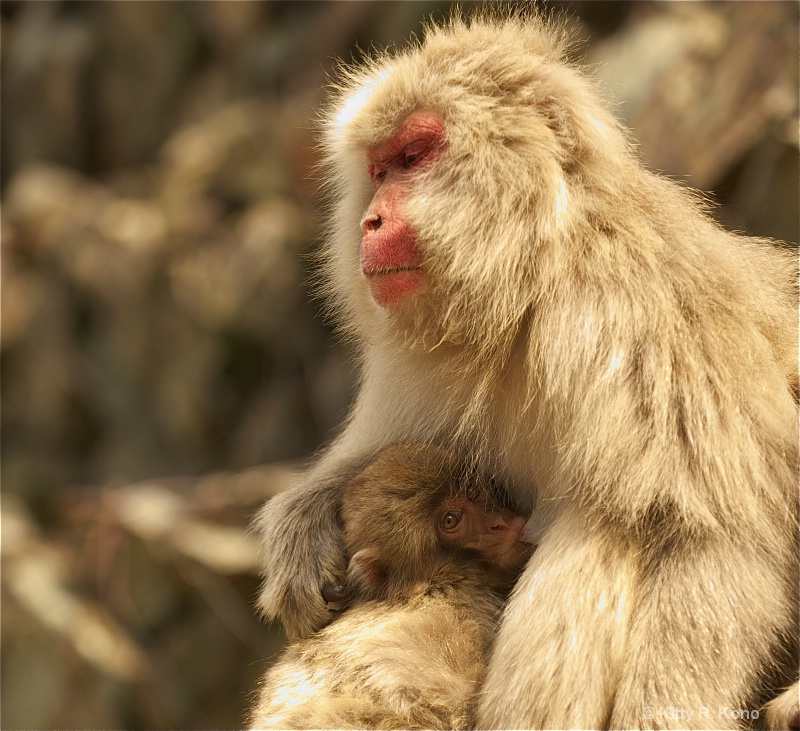Mother and Baby Snow Monkey