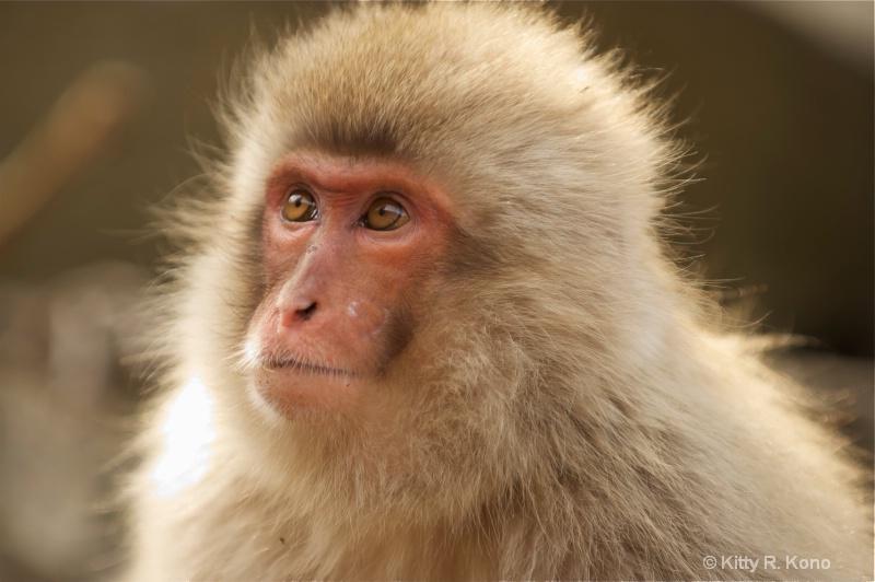 four monkey