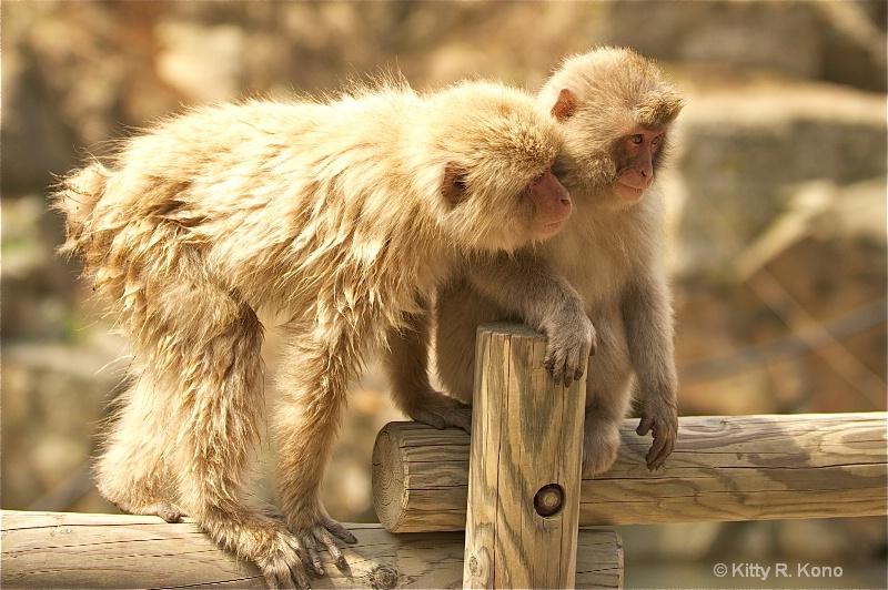 twelve monkey