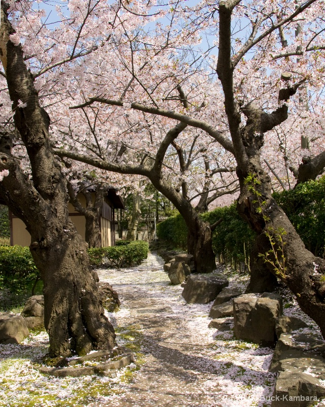 petal path